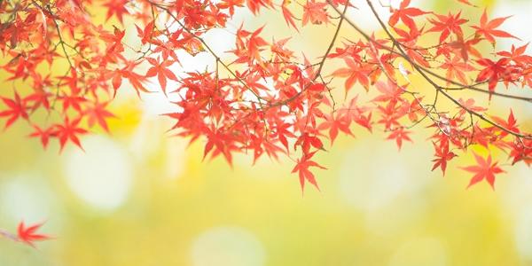 【最大53%OFF】資格のキャリカレ!秋のチャレンジ応援キャンペーン