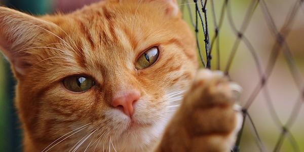 愛猫の健康管理法・対処法を習得!愛猫健康通信講座の特長とは?