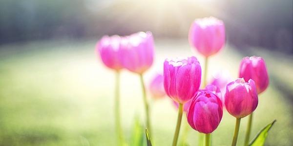 春~初夏に学習を開始すると良い資格