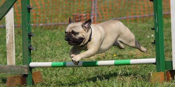 英国式家庭犬トレーニング技法を習得!ドッグトレーナー通信講座とは