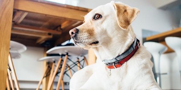 ペット専門家の必須知識をマスター!動物看護士通信講座の特長とは?